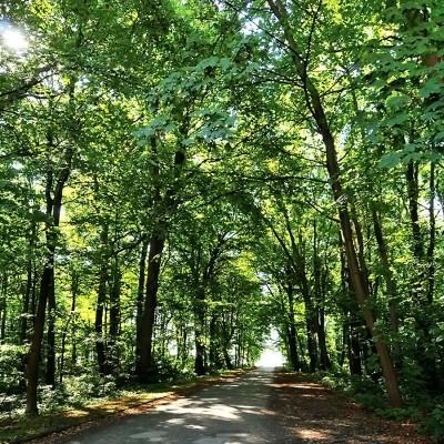 Bäume an einer Straße