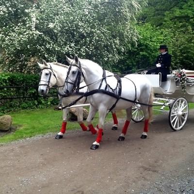 weiße Kutsche mit zwei weißen Pferden